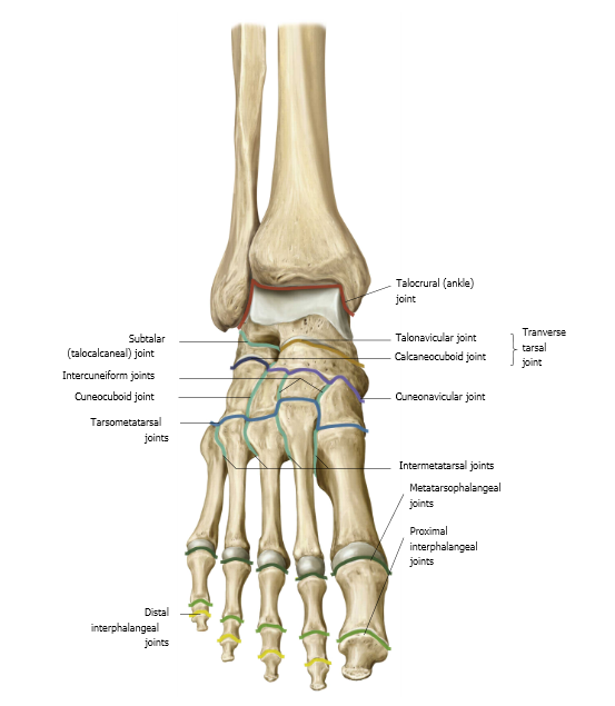 labeled foot