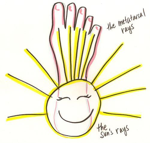 Metatarsal-sun-rays