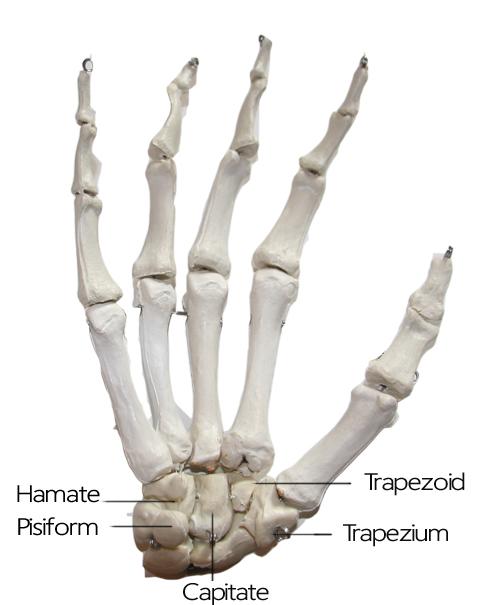 Hand_model